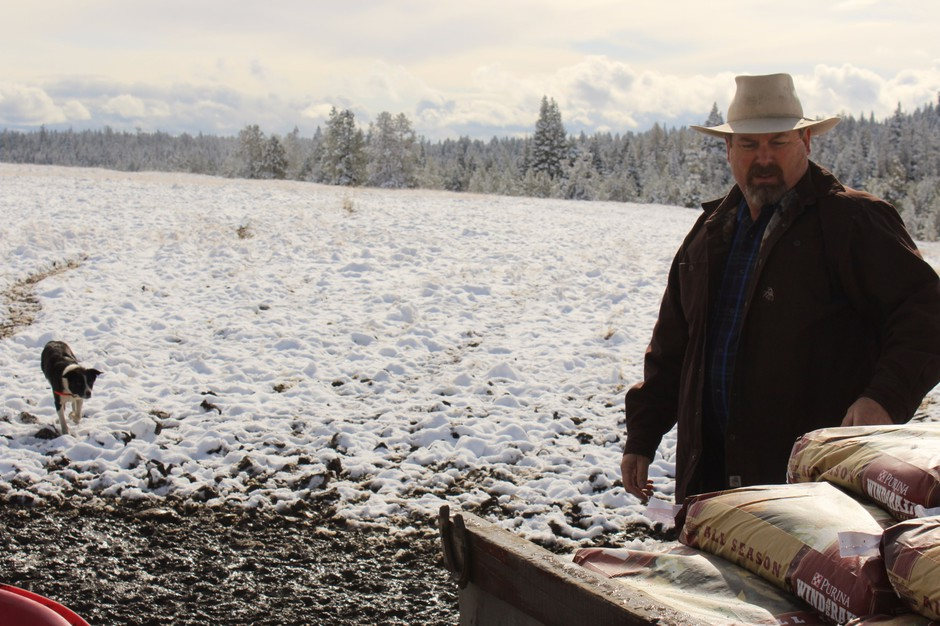 Todd Nash unloads bags of mineral feed for his cattle in a pasture where he's had multiple wolf attacks. After Nash and other ranchers petitioned forwolves from onepack to be killed, another moved in andkept preying oncattle.