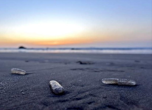 Pyrosomes dot the landscape near Cannon Beach as research into their impact on ecosystems continues.