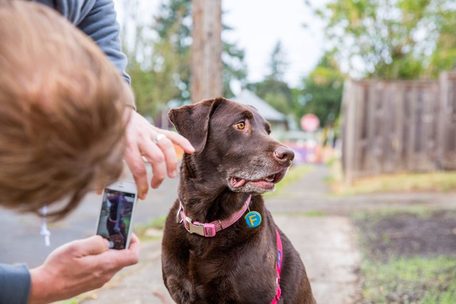 Craig Giffen takes a picture of his dog, Ms. Freddie, wearing her new, free necklace.