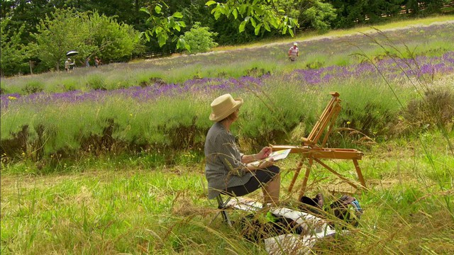 Painters capture the lavender fields of Oregon