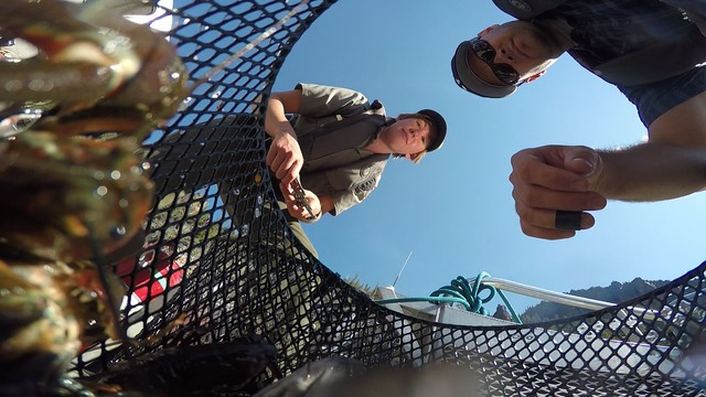 Crater Lake researchers have been trapping crayfish for years, removing hundreds of the invasive species from the lake.