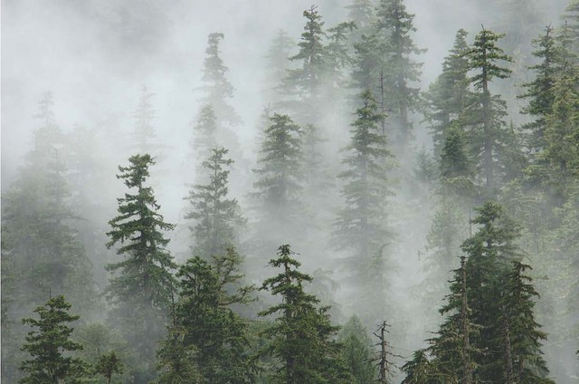 Old growth forest in the Oregon Cascades
