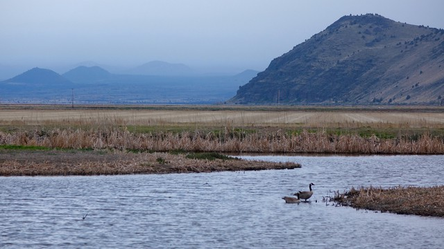Climax marsh communities and potato fields can be found side-by-side on Tule Lake National Wildlife Refuge