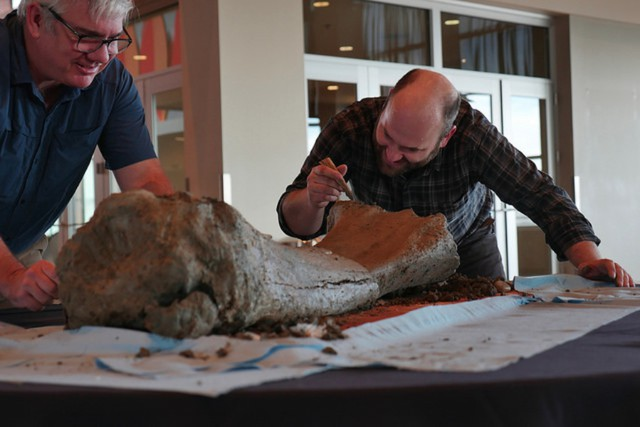 Loren Davis, left, plans to treat the 5-foot mammoth femur recovered from Reser Stadium to preserve it.