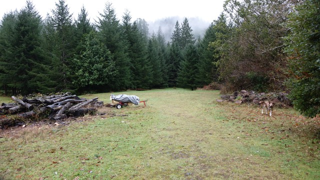 When Cilde Grover was growing up, this pasture was open all the way to Winchuck River. Now the trees are taking over.