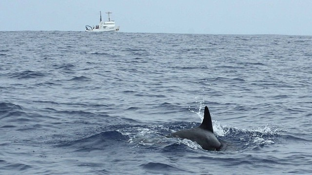 Scientists with the National Marine Fisheries Service spotted tropical pygmy killer whales off the coast of California for the first time this year.