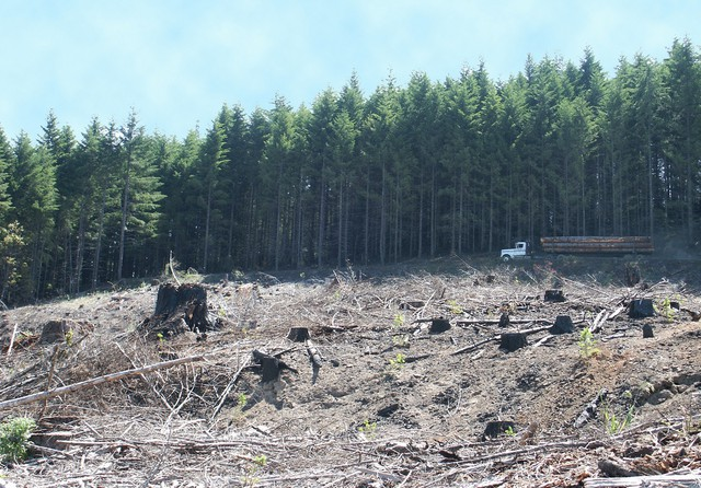 Clearcut on Weyerhaeuser land with log truck in distance, Millicoma Tree Farm, Western Oregon.