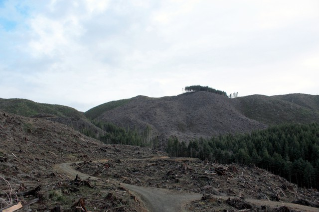 The forestsurrounding Jetty Creek, the water supply for the town of Rockaway Beach on Oregon's north coast, has been logged heavily. Some residents there say the timber harvests have impacted their water quality, but the forest owners, industry groups and the state's Department of Forestry disagree.