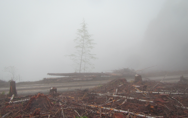 This photograph was taken on the Ash Valley Overlook Unit, a recently logged portion of the Elliott State Forest sprayed by Applebee Aviation hours before the Oregon Department of Agriculture suspended the company's license. The license suspension came after a state investigation found violations of worker protection laws.
