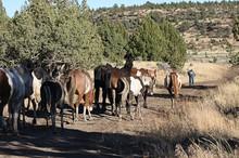 A herd of wild horses follows Farrel Rothauge down a trail.
