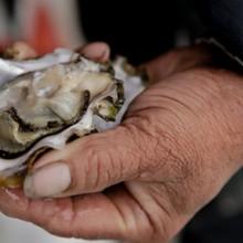 A Puget Sound oyster