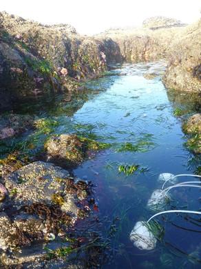 Ocean acidification sensors on the West Coast.