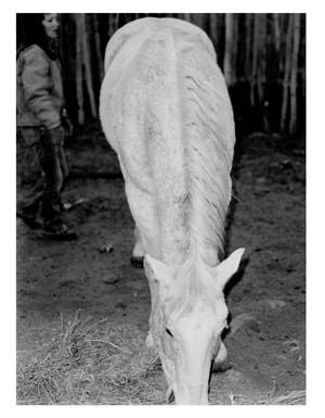 """""""Horse"""" is one of the black and white photos Lowell has in Thomas's show."""