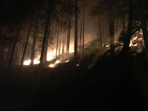 A hillside burning in the Happy Dog Fire.