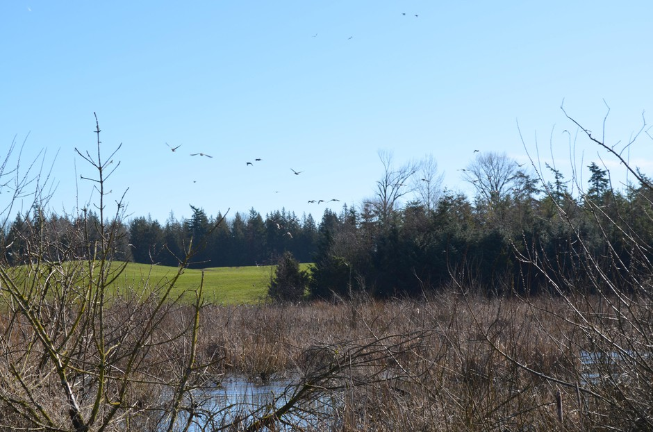 Whatcom County dairy farmer Steve Groen has sixty acres of woodlands and wetlands on his land.