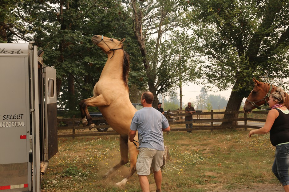 A horse is spooked during the Eagle Creek Fire.