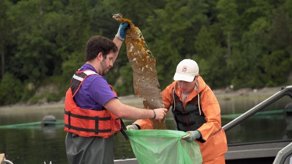 Stephen Schreck (left) and Ryan Cox of Puget Sound Restoration Fund collect kelp samples.