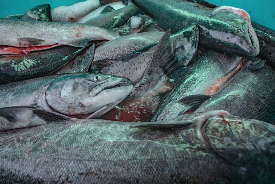 Unusual ocean and climate conditions have significantly harmed several Washington fisheries. Six fisheries in the state could now seek federal assistance to help bring things back to normal.